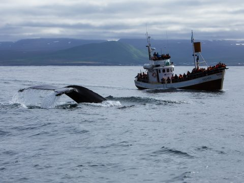Island whale watching boat