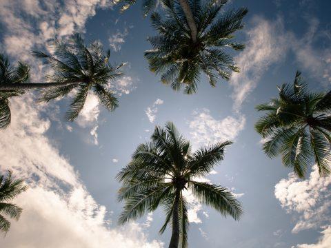 Palm trees Thailand 2